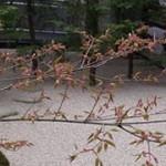 島根県安来市の足立美術館で体験。「北大路魯山人の美 和食の天才」