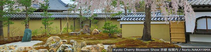 Kyoto Cherry Blossom Show