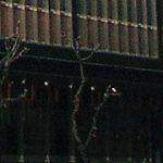 最終第3部は7月18日まで。出光美術館開館50周年記念「美の祝典Ⅲ ―江戸絵画の華やぎ」
